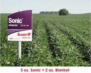 Sonic + Blanket 4F