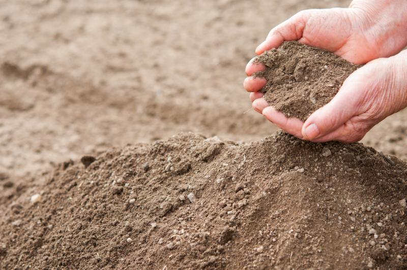 Is your soil healthy