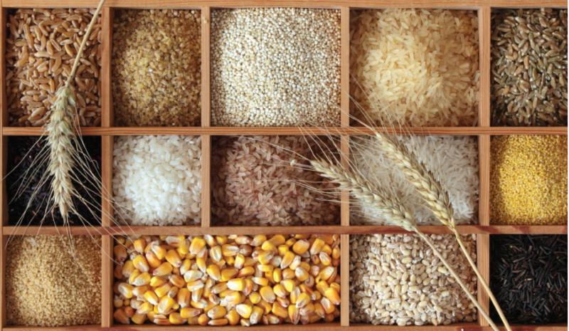 Box of seeds including corn_ barley_ rye and wheat_ among others.