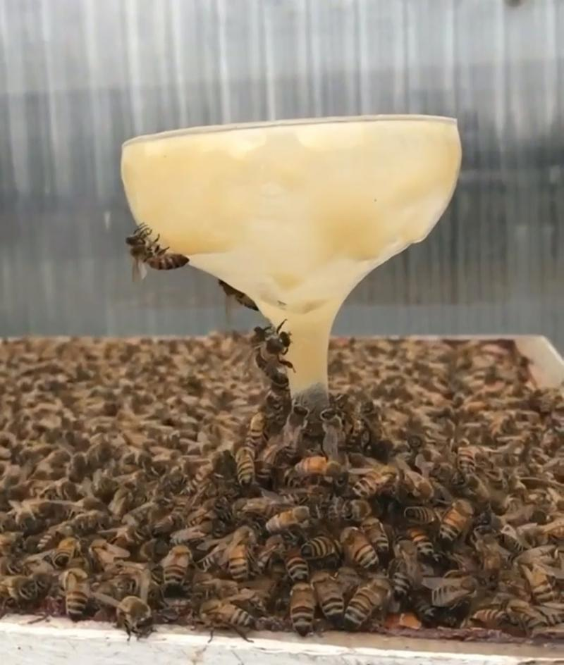 bees and cocktail glass