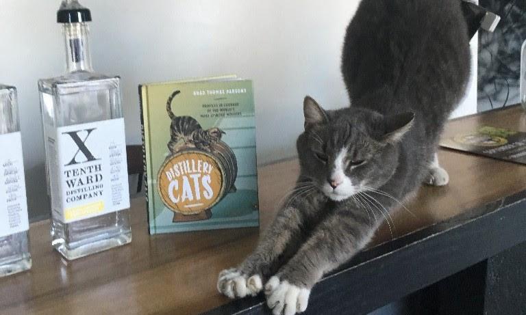 Verbal_ the cat at Tenth Ward Distilling