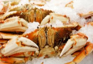 Fresh Dungeness Crabs