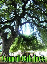 Council Oak Tree