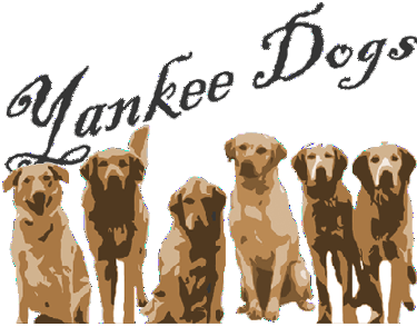 Yankee Dogs