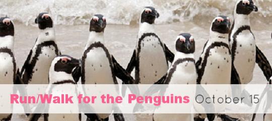 Run Walk for the Penguins