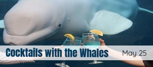 cocktails with whales