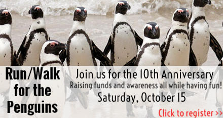 Register for the RunWalk for the Penguins