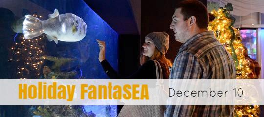 Holiday FantaSEA