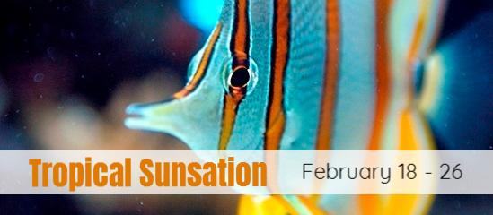 Tropical Sunsation