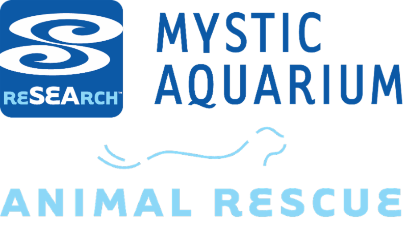 Mystic Aquarium Animal Rescue