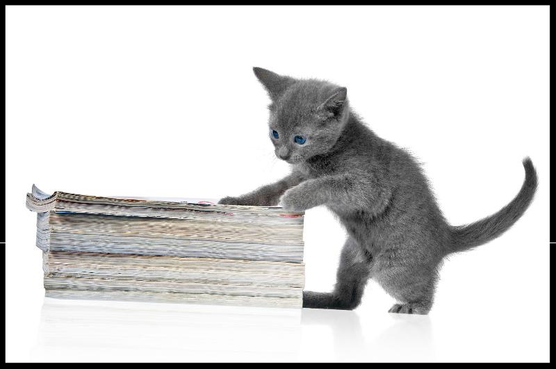 Cat with research papers