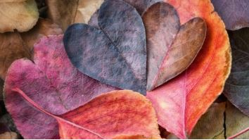 fall leaves in shape of hearts