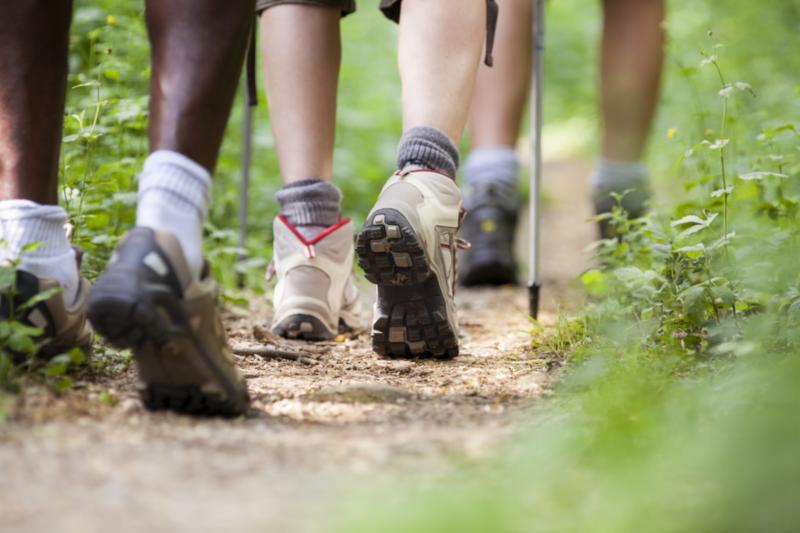trekking_in_woods.jpg