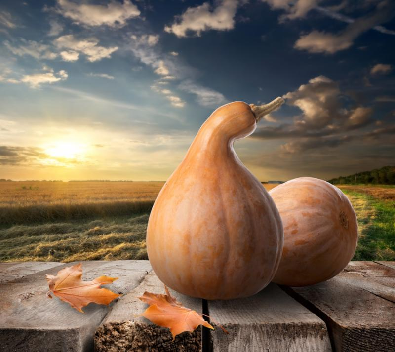 gourds_on_table_sunset.jpg