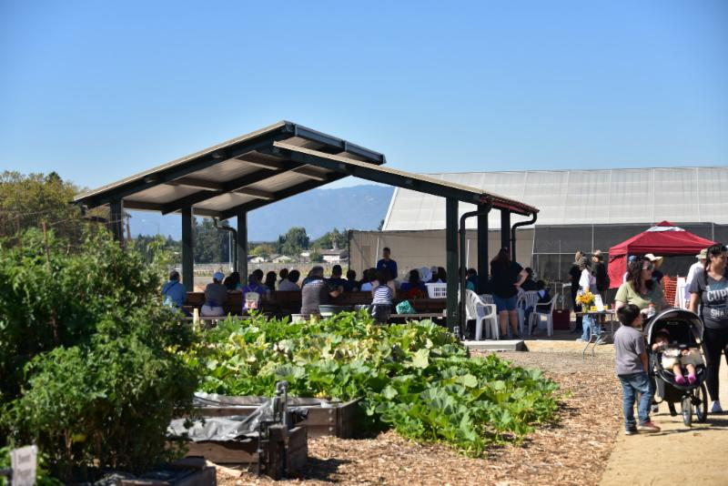 Martial Cottle Park Teaching Pavilion at the 2018 Fall Market by Hank Morales