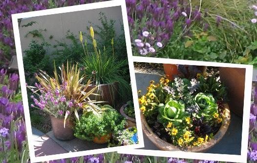 Container gardening UC Arboretum website