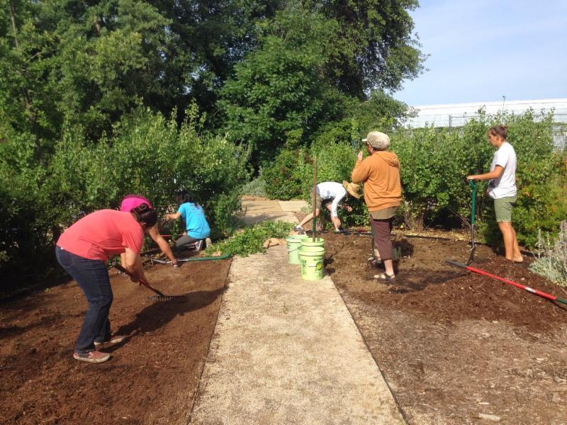 Garden  Clean Up at UC Arboretum Davis Emily Schmidt