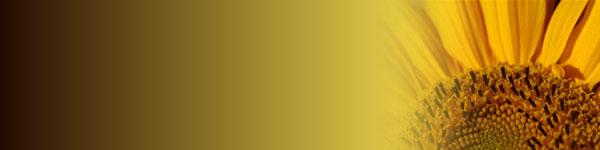 sunflower-banner.jpg