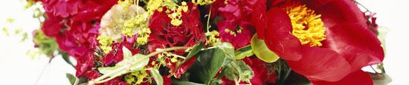 red-flowers-banner.jpg