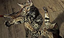 Nature--Pets--Wild at Heart