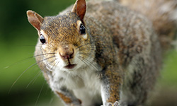 Nature-A Squirrel's Guide to Success