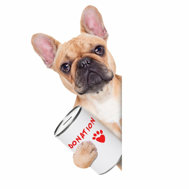 french bulldog with a donation can collecting money for charity isolated on white background