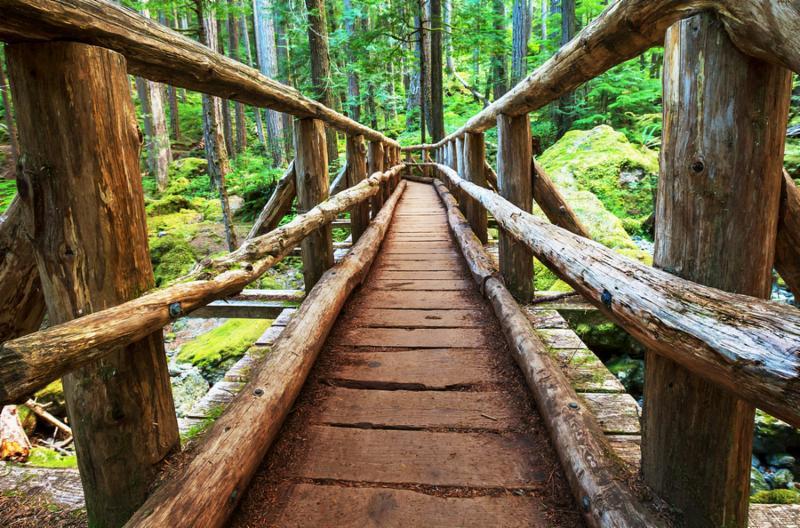boardwalk_in_forest.jpg