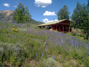 georiga's cabin