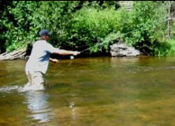 fishing the taylor