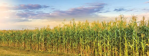 ILSI Research Foundation Sustainable Agriculture Summit