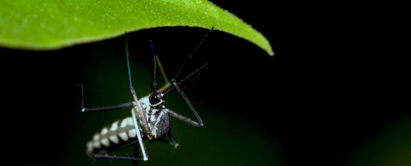 Gene Drives for Malaria Control