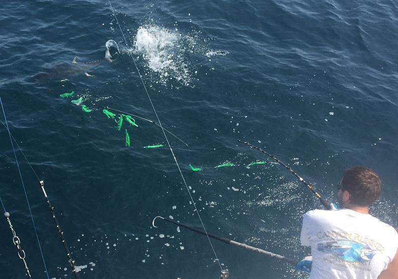 Jersey shore fishing yellowfin bite in the hudson for Nj shore fishing