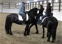 horses in arena