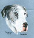 Dog portrait by Trudie Barreras