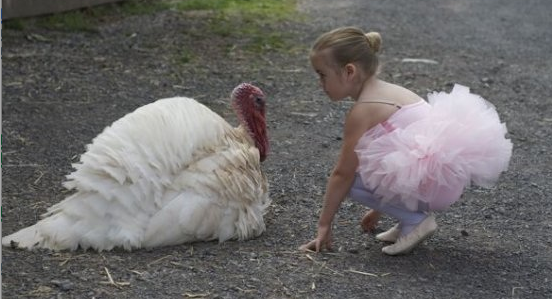 White turkey with young ballet dancer student in pink tutu