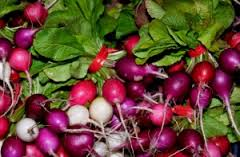 Laguna Farm Radishes