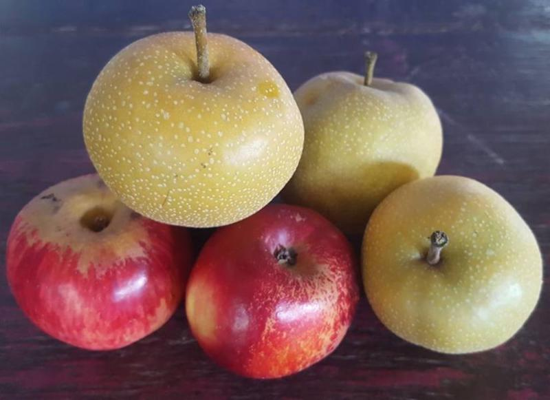 Asian pears and apples