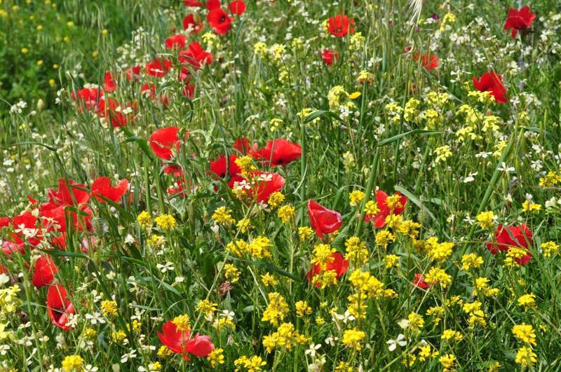 Grazalema Flowers