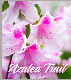 Azalea                                                            Trail
