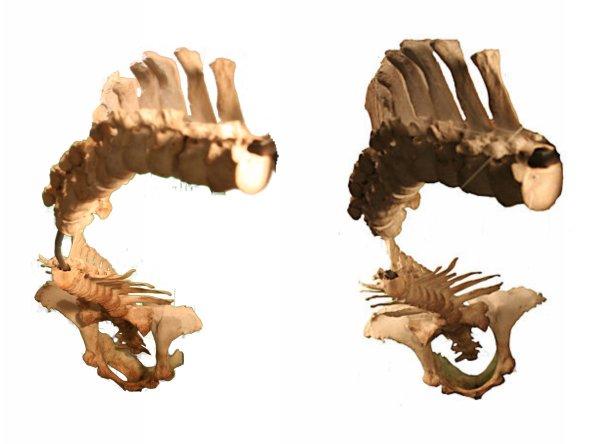 spinal rotations