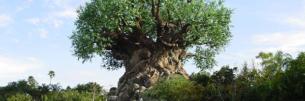 Disney_s Tree of Life