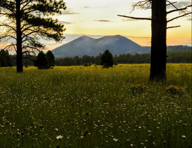 Ed Dunn - Sunset Crater with Coreopsis