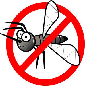 No Mosquito