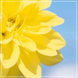 yellow-flower-closeup.jpg