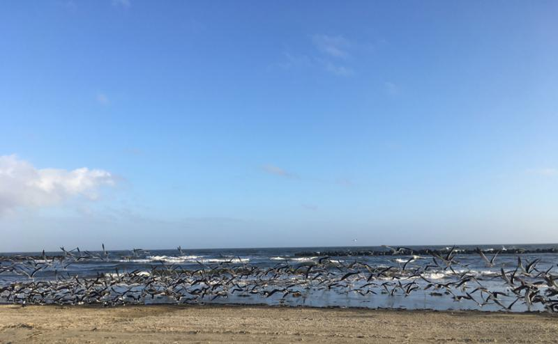 Birds at Grand Isle State Park
