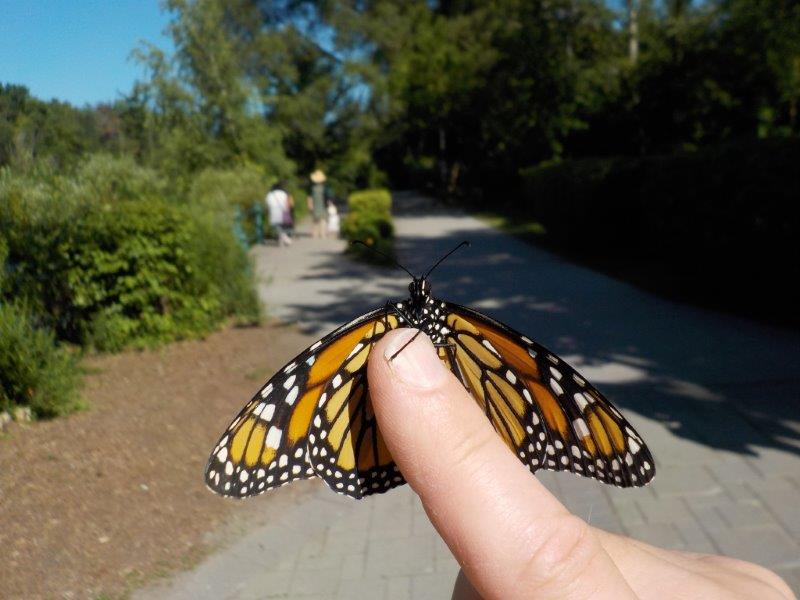 The Monarch who stayed for a while longer