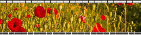 bricks_flowers.jpg