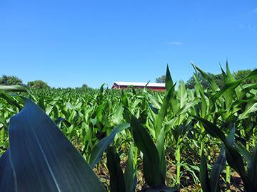 Farm easement