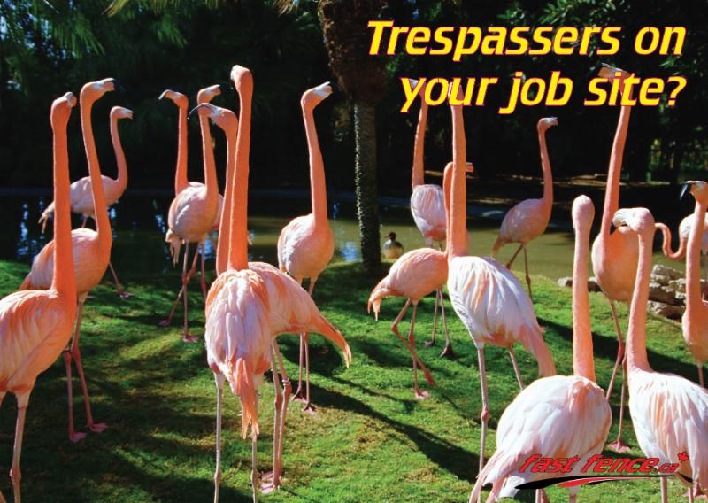 Flamingo trespassers