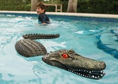 pool alligator